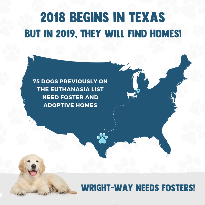 FOSTERS NEEDED! (4).png