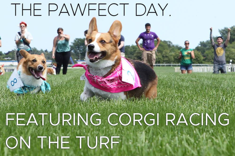 Horses and Hounds Day with the Corgi Classic — Wright-Way Rescue
