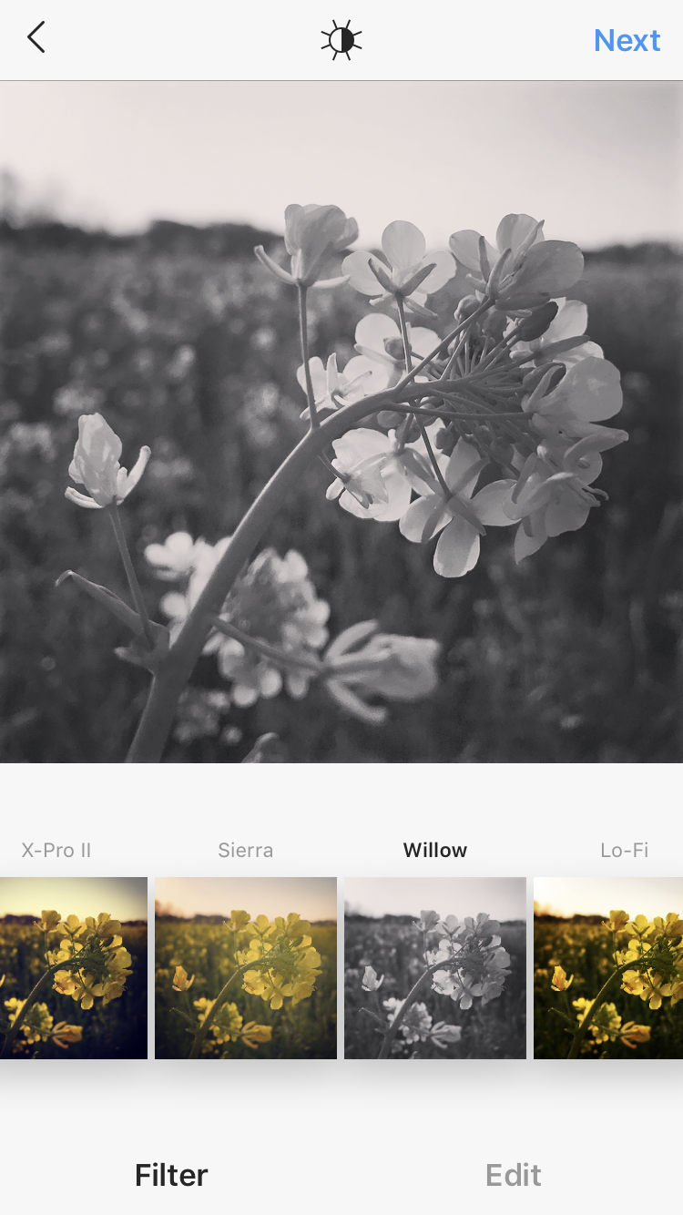 WILLOW_IMG_0402.PNG
