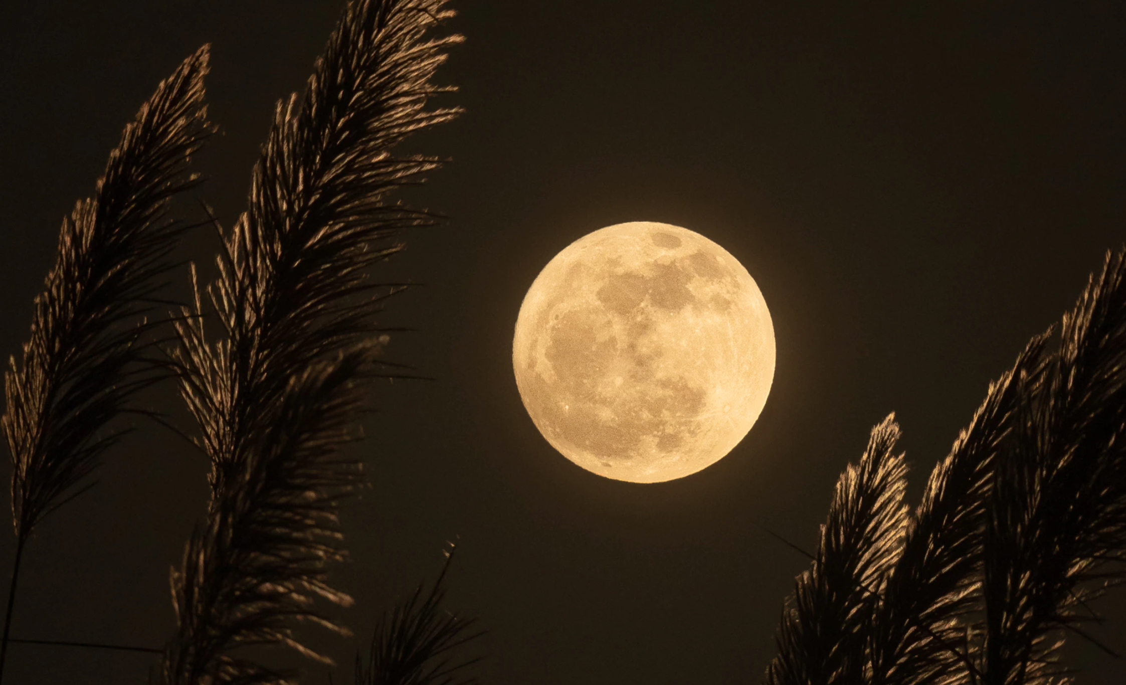 full moon janae.png