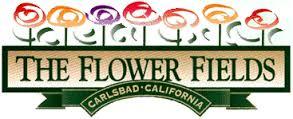 flower fields.jpeg
