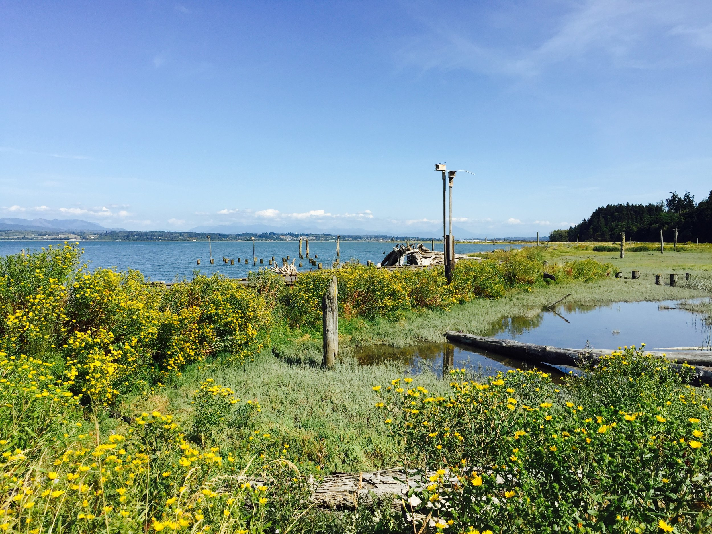U tsalady Point on Camano Island