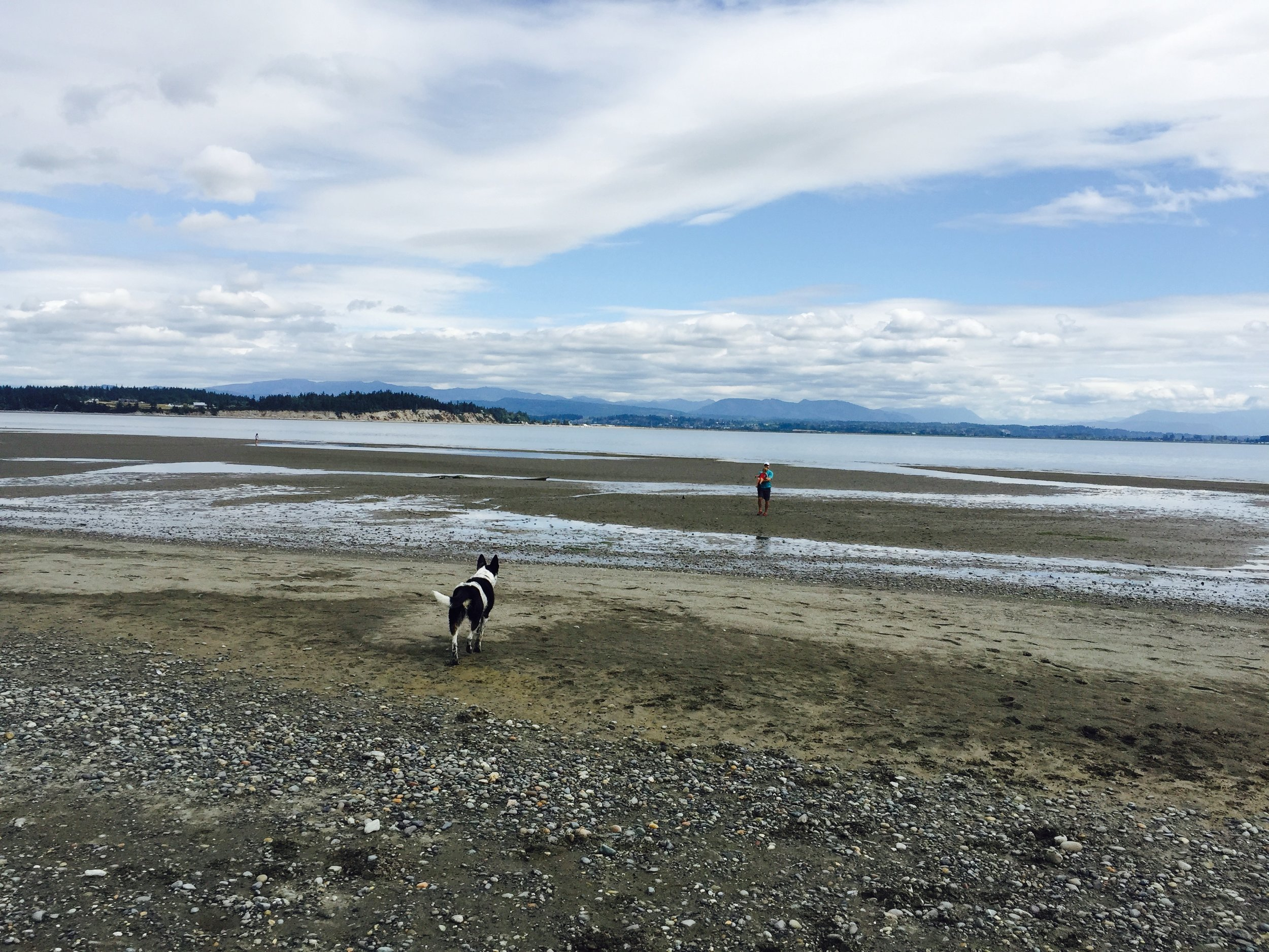 Take a walk on Iverson Beach, located on Camano Island
