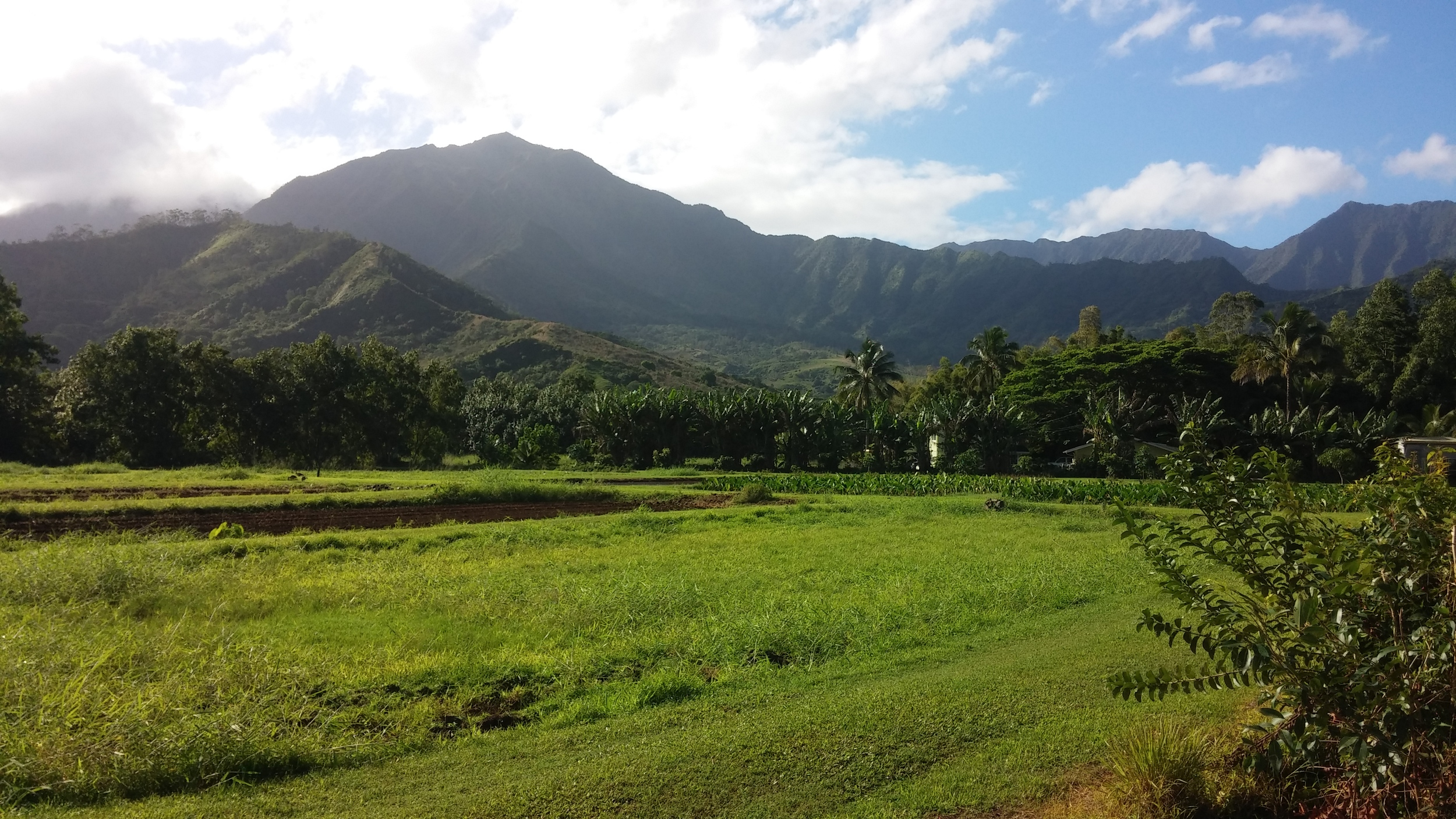 Loi fields with the original Hawaiians' irrigation system. Spectacular!