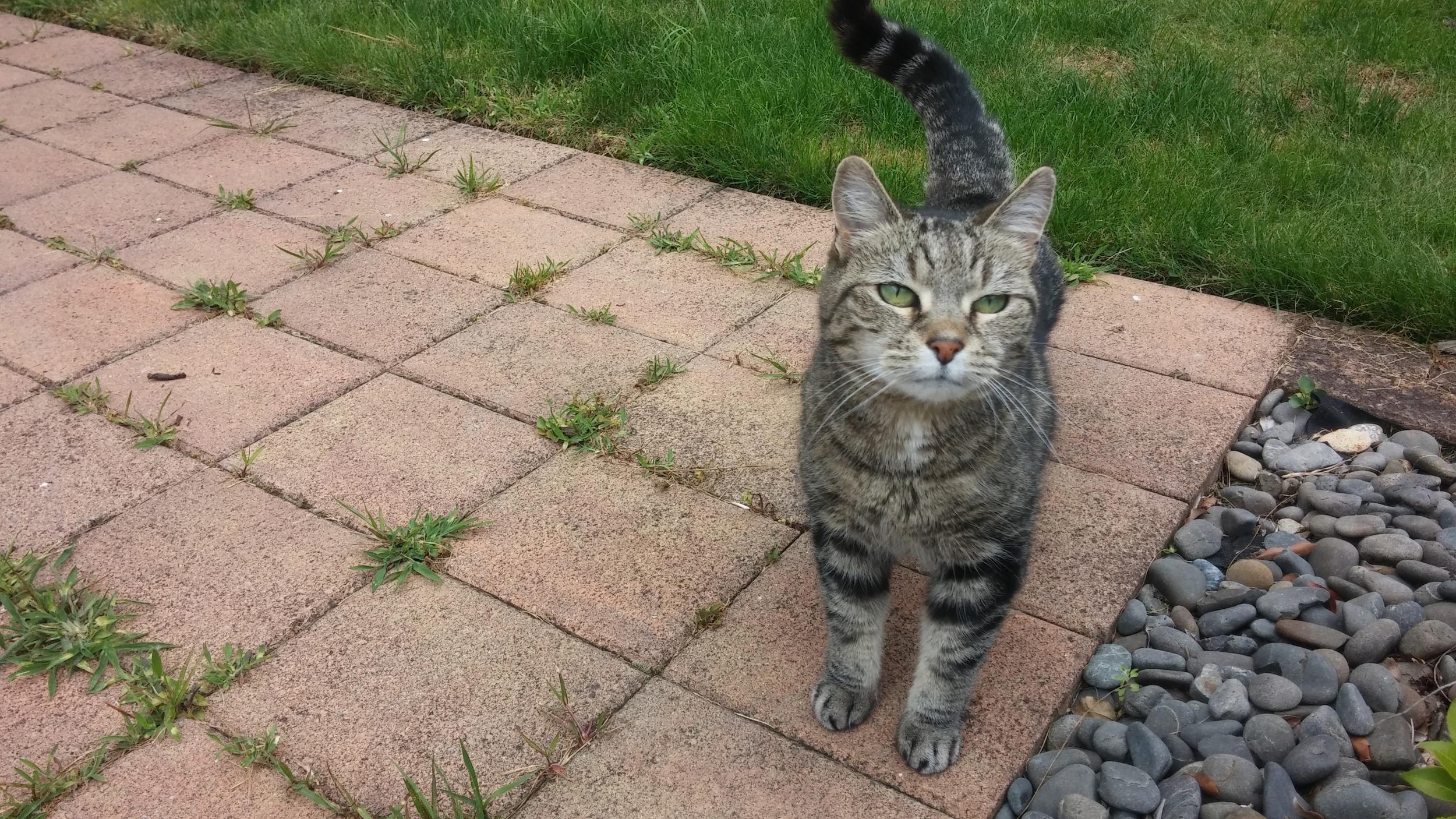 Meet Madam Kitty.