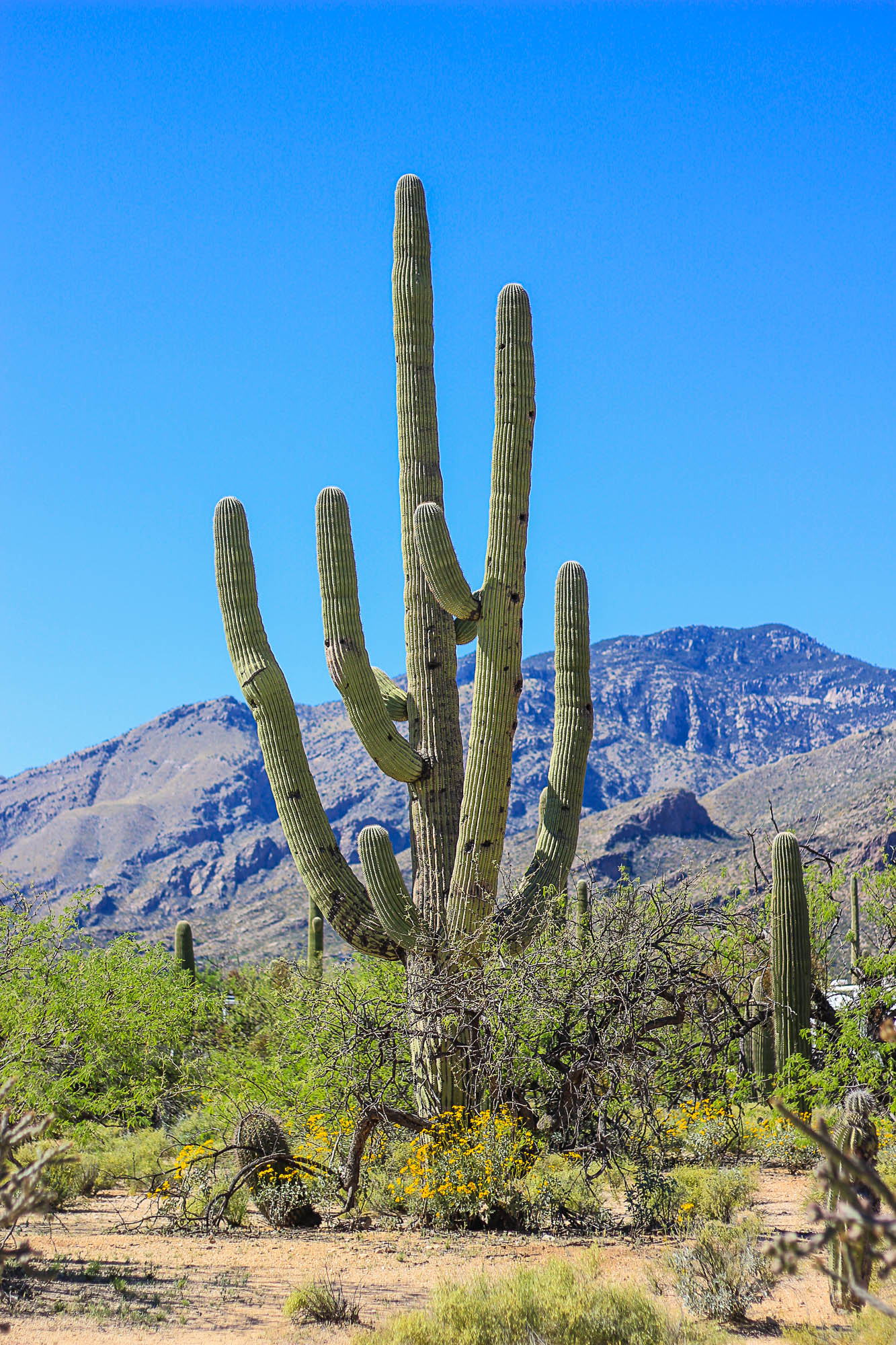 Sabino Canyon National Forest, Tucson Arizona, NuventureTravels.com, Saguaro Cactus, Desert