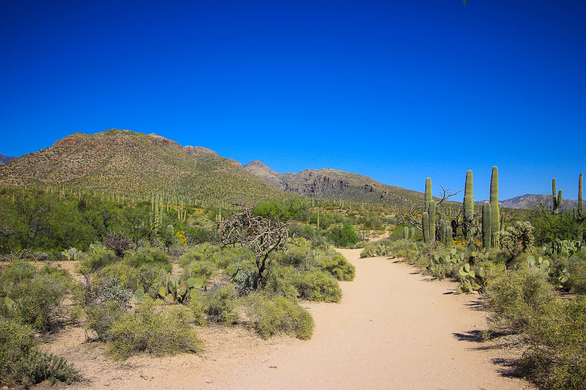 Sabino Canyon's 1/2 Mile Nature Trail- no shade here!