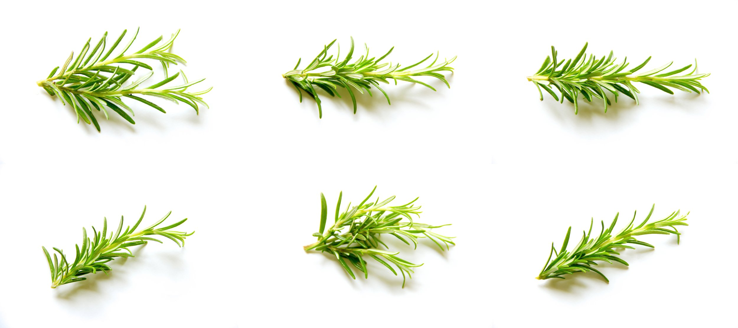 ROSEMARY HERBAL RINSE   ROSEMARY HAS A LONG HISTORY AS A STRONG STIMULANT FOR HAIR GROWTH.  IT FEEDS THE HAIR ROOT.   IT IS ALSO KNOWN AS THE HERB OF REMEMBERANCE - GOOD FOR THE MEMORY AND MENTAL CLARITY.