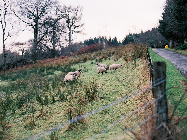 Scotland_107.jpg