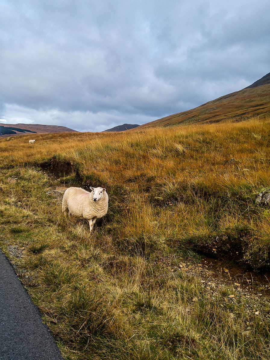 Scotland Fall 2016_0031.jpg