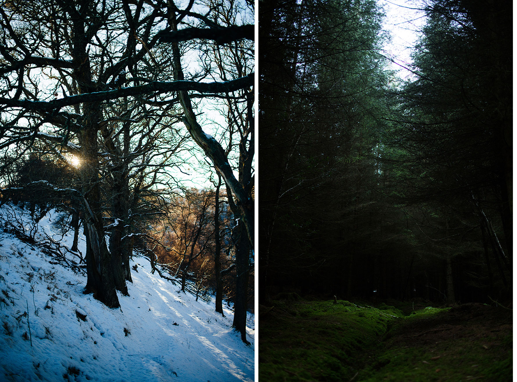 Two forests in comparison - photos taken on the same day within 2 hours of each other. Approx distance between locations: 20 miles.