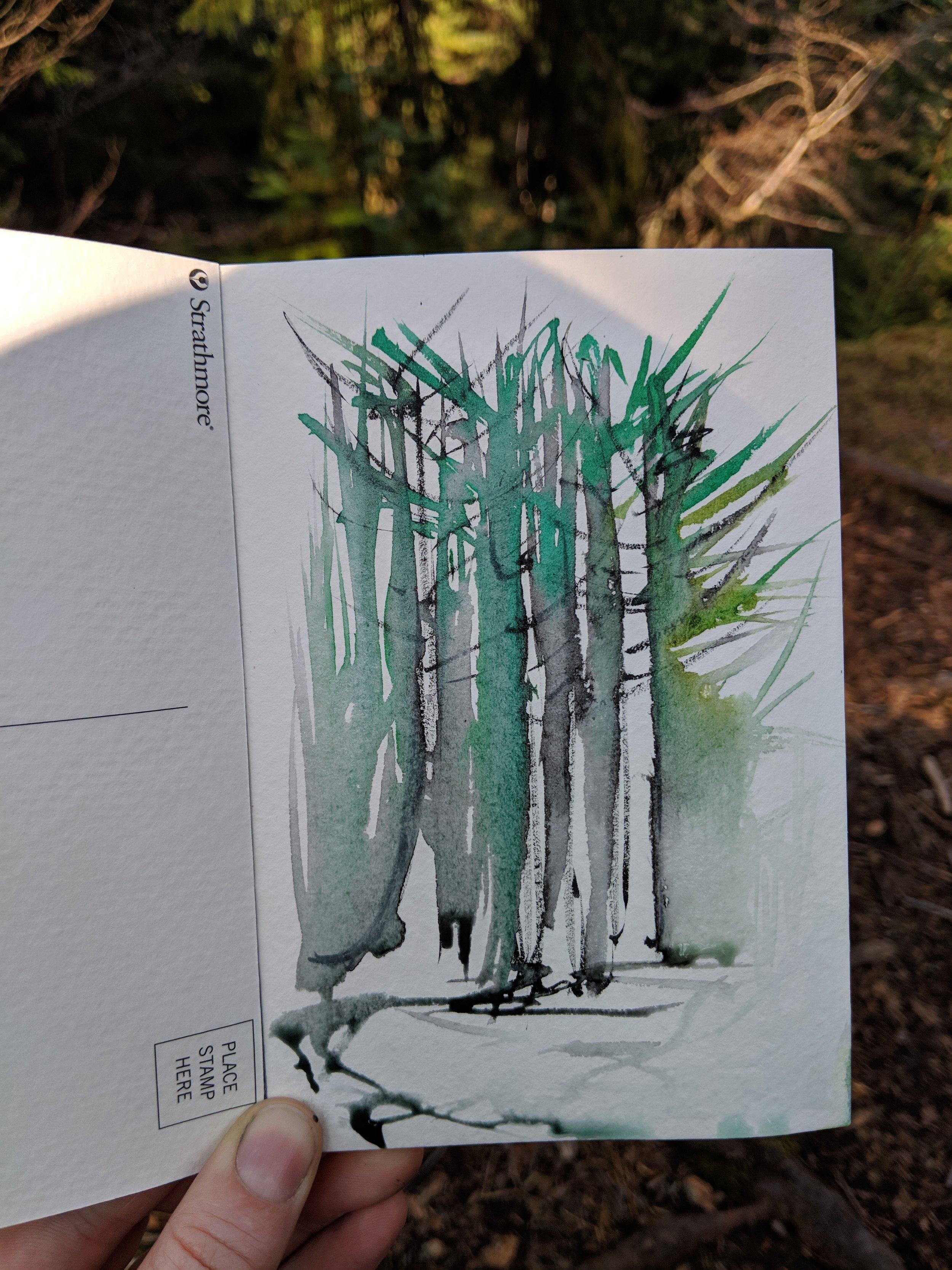 Evanton Wood 9.jpg