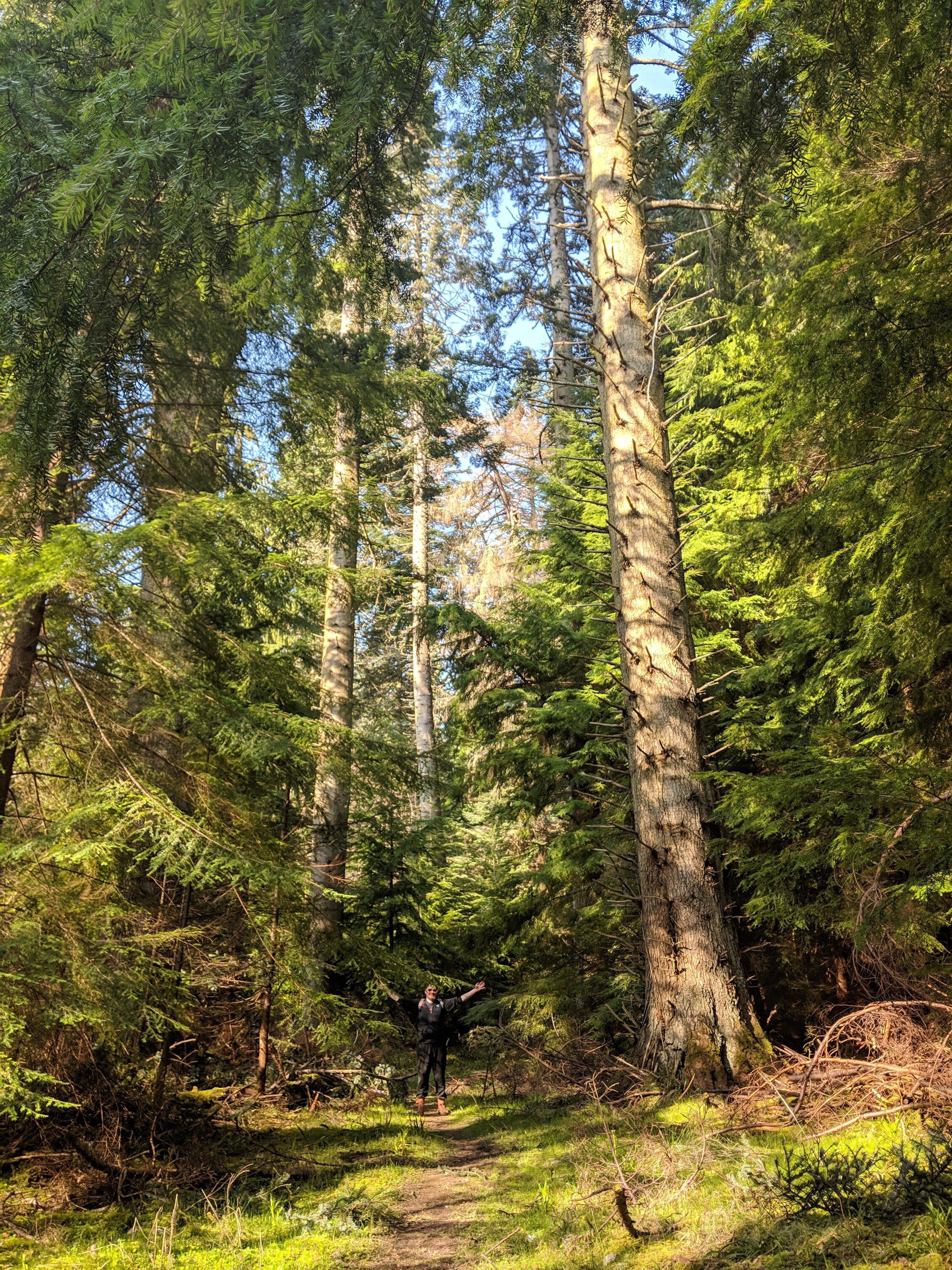 Evanton Wood 10.jpg