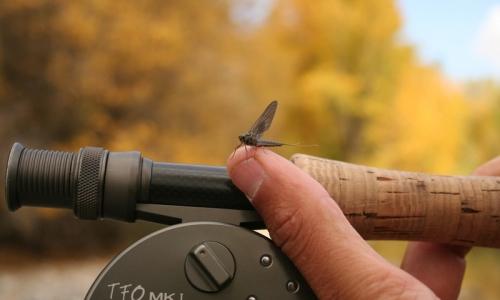 1619_9660_Snake_River_Fly_Fishing_md.jpg