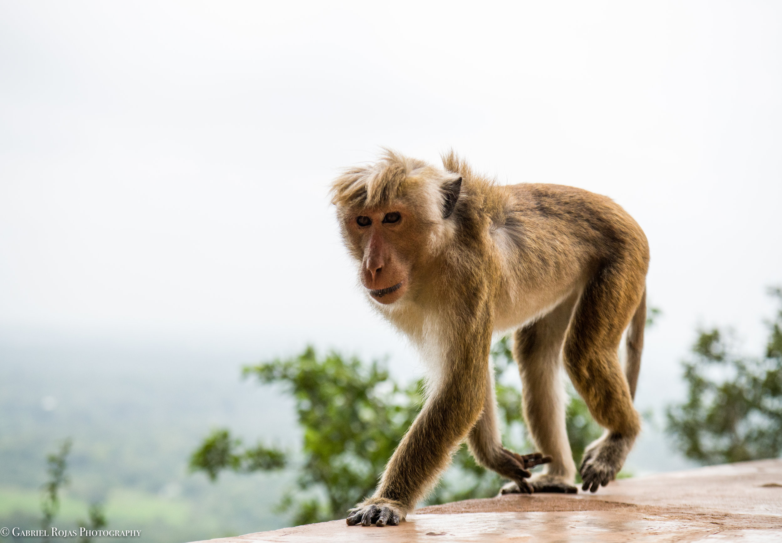 Sri Lanka 2019-58.jpg