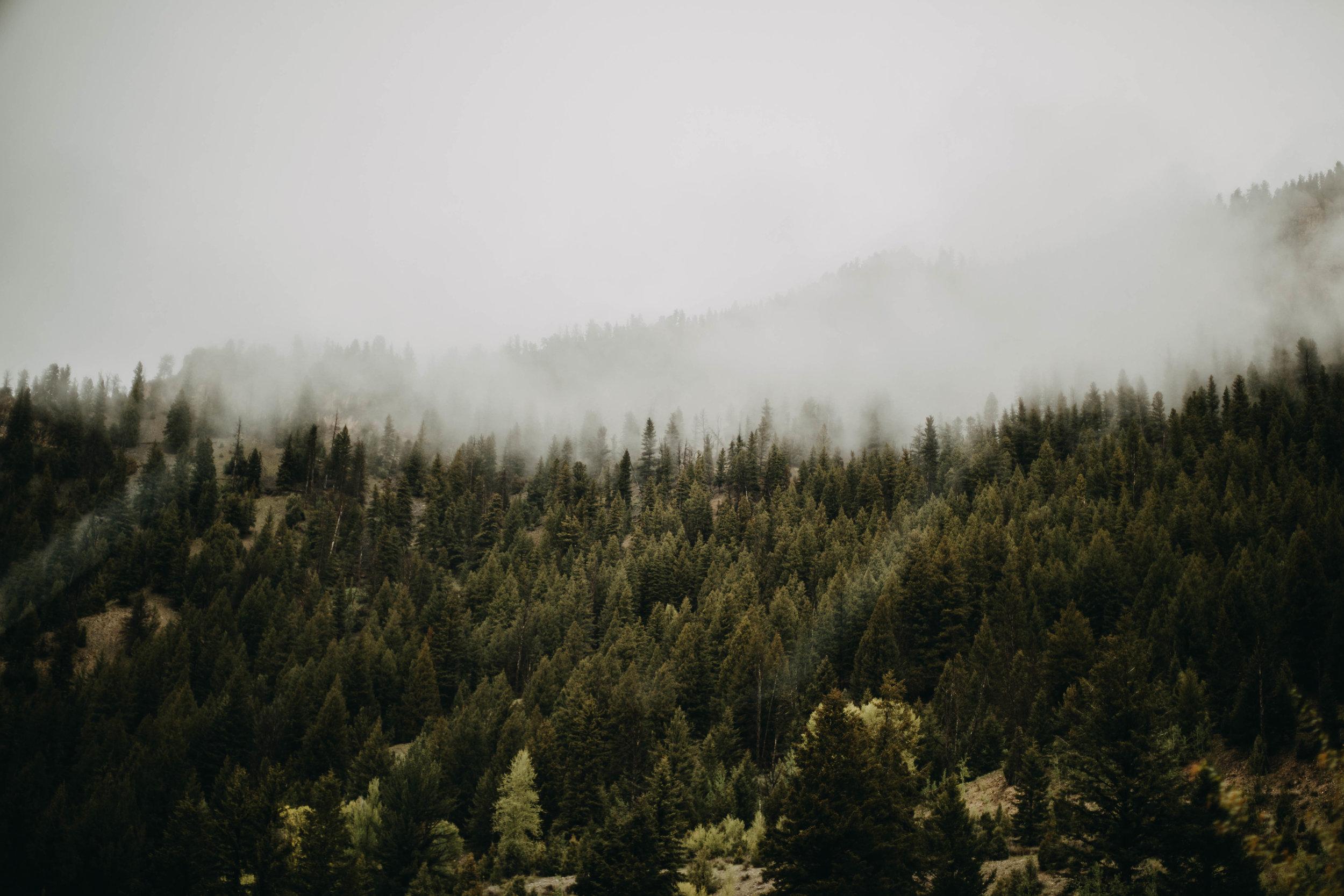 9. Colorado Forest & Fog