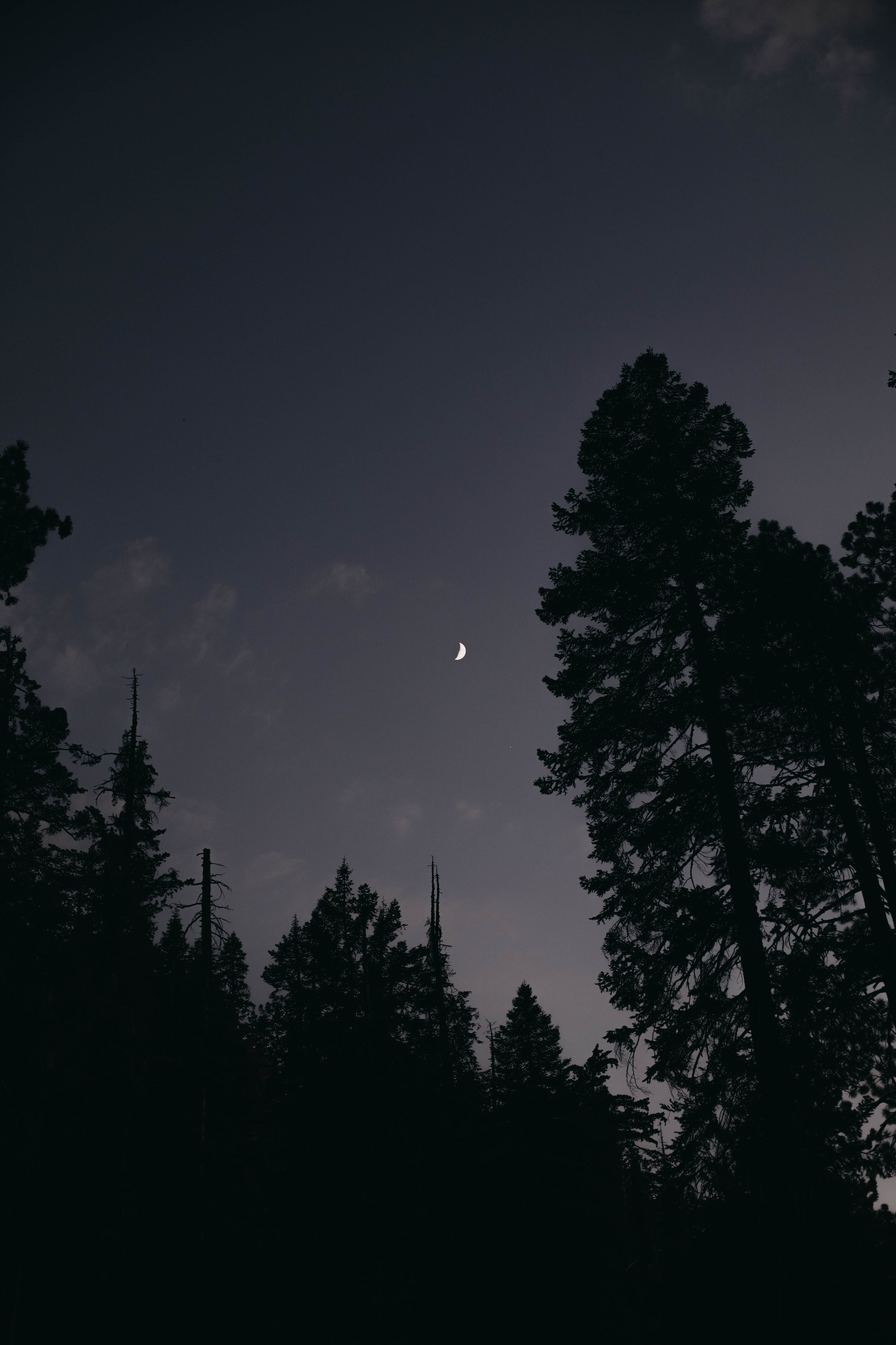13. Sequoia National Park