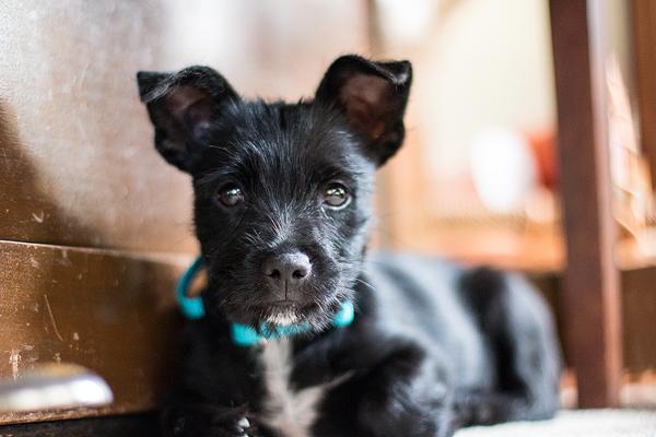 California Dog Photography