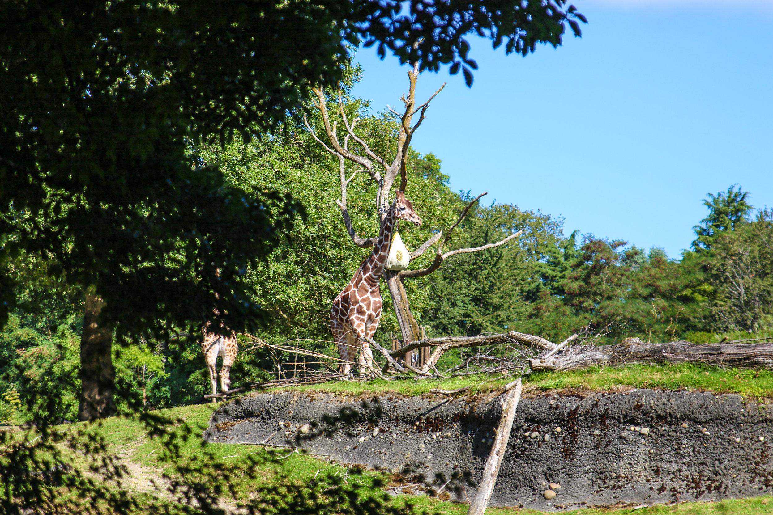 woodland zoo-2.jpg