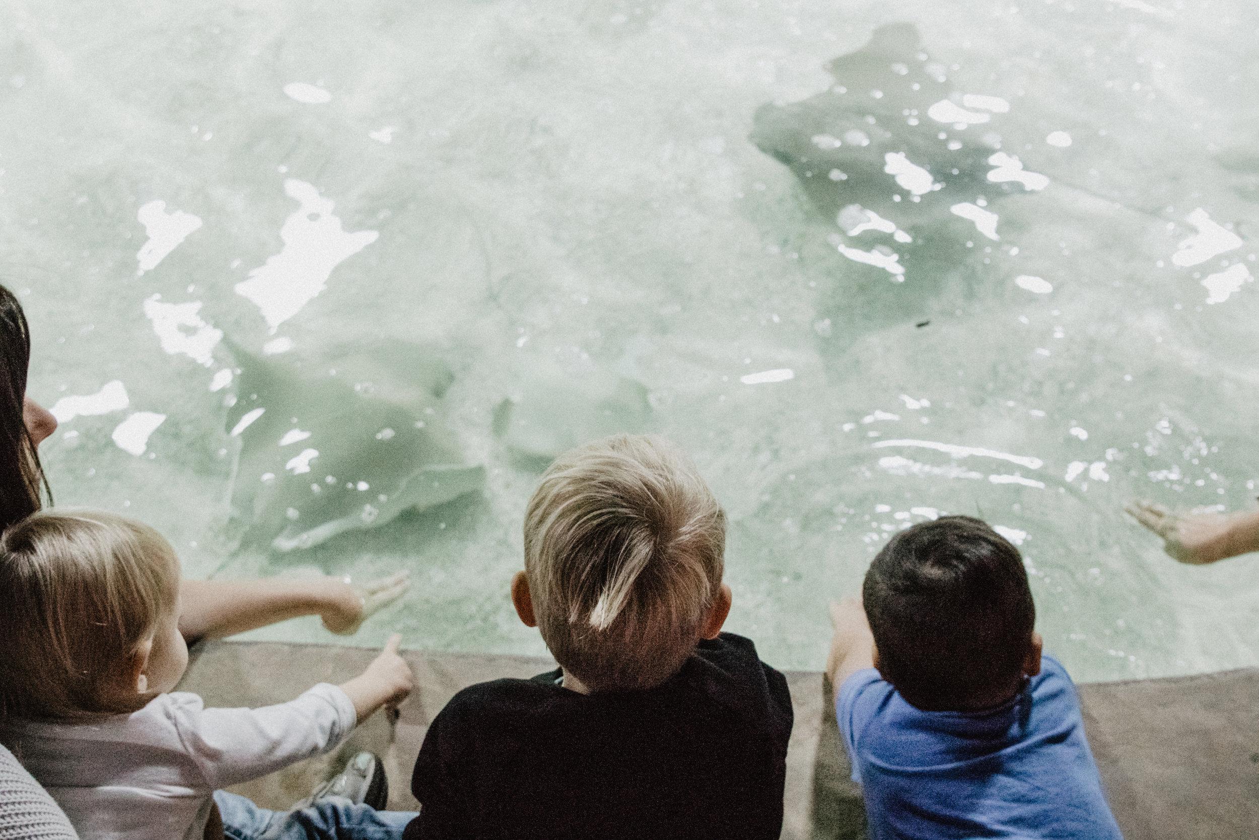 aquarium-14.jpg