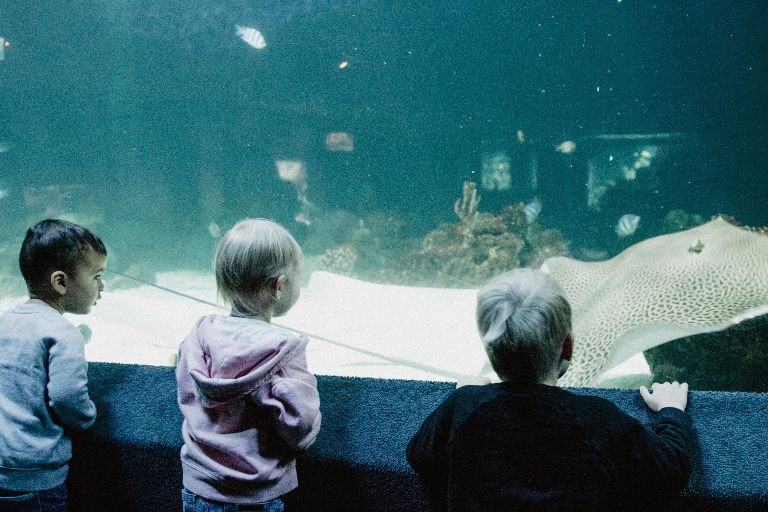 aquarium-10.jpg