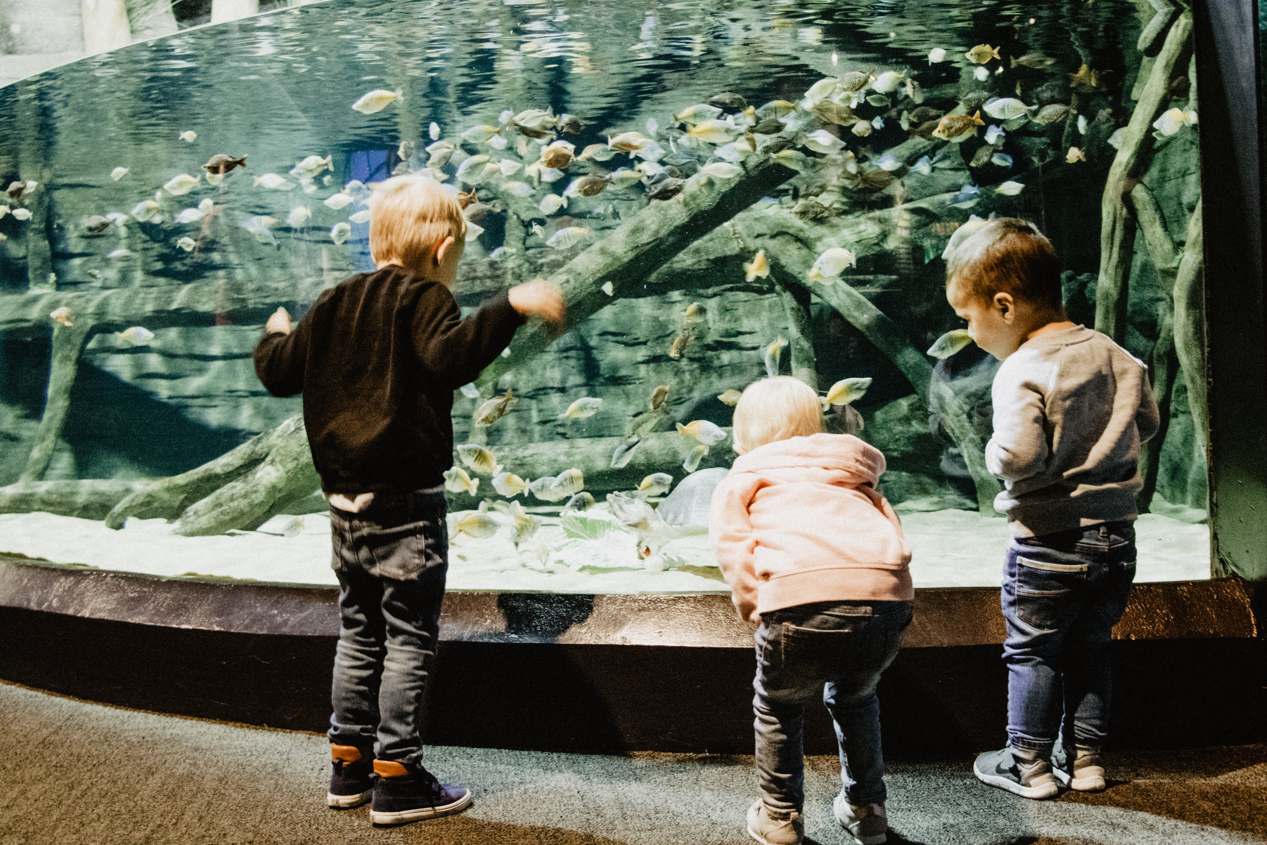 aquarium-5.jpg