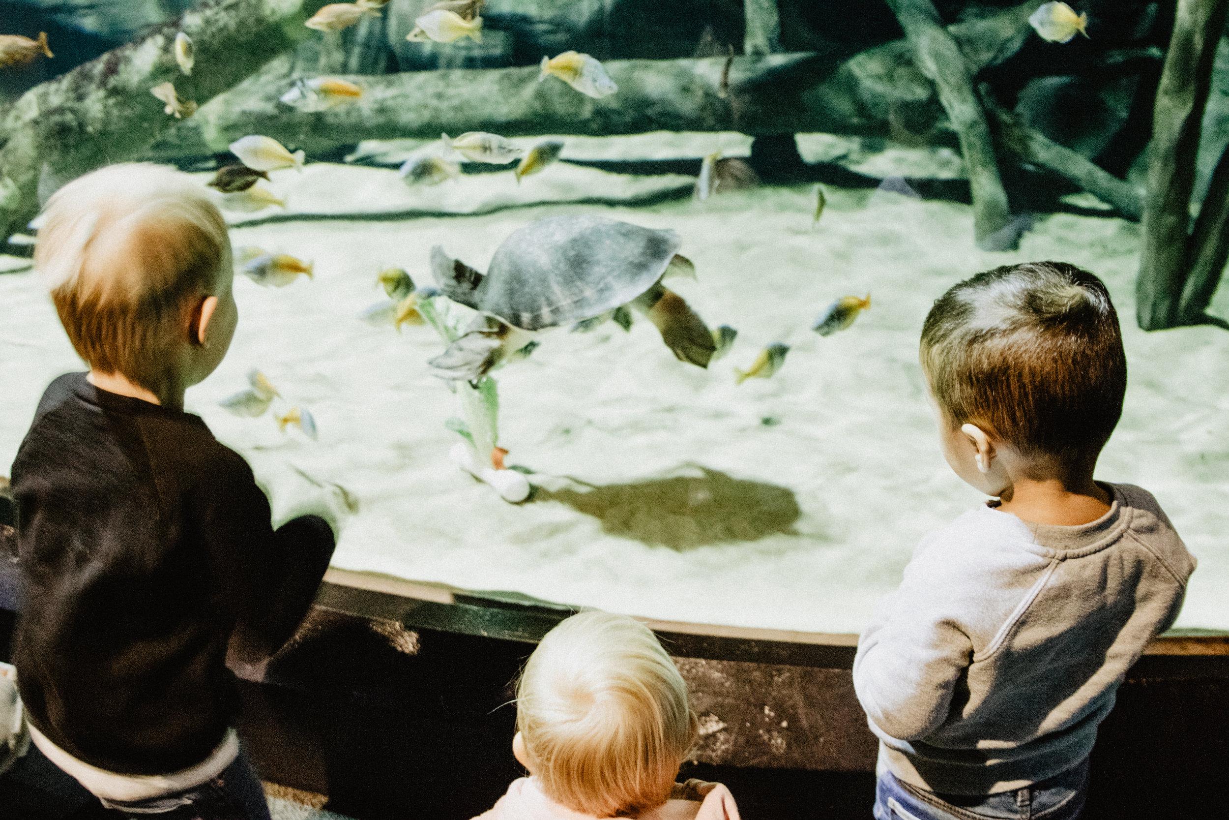 aquarium-4.jpg
