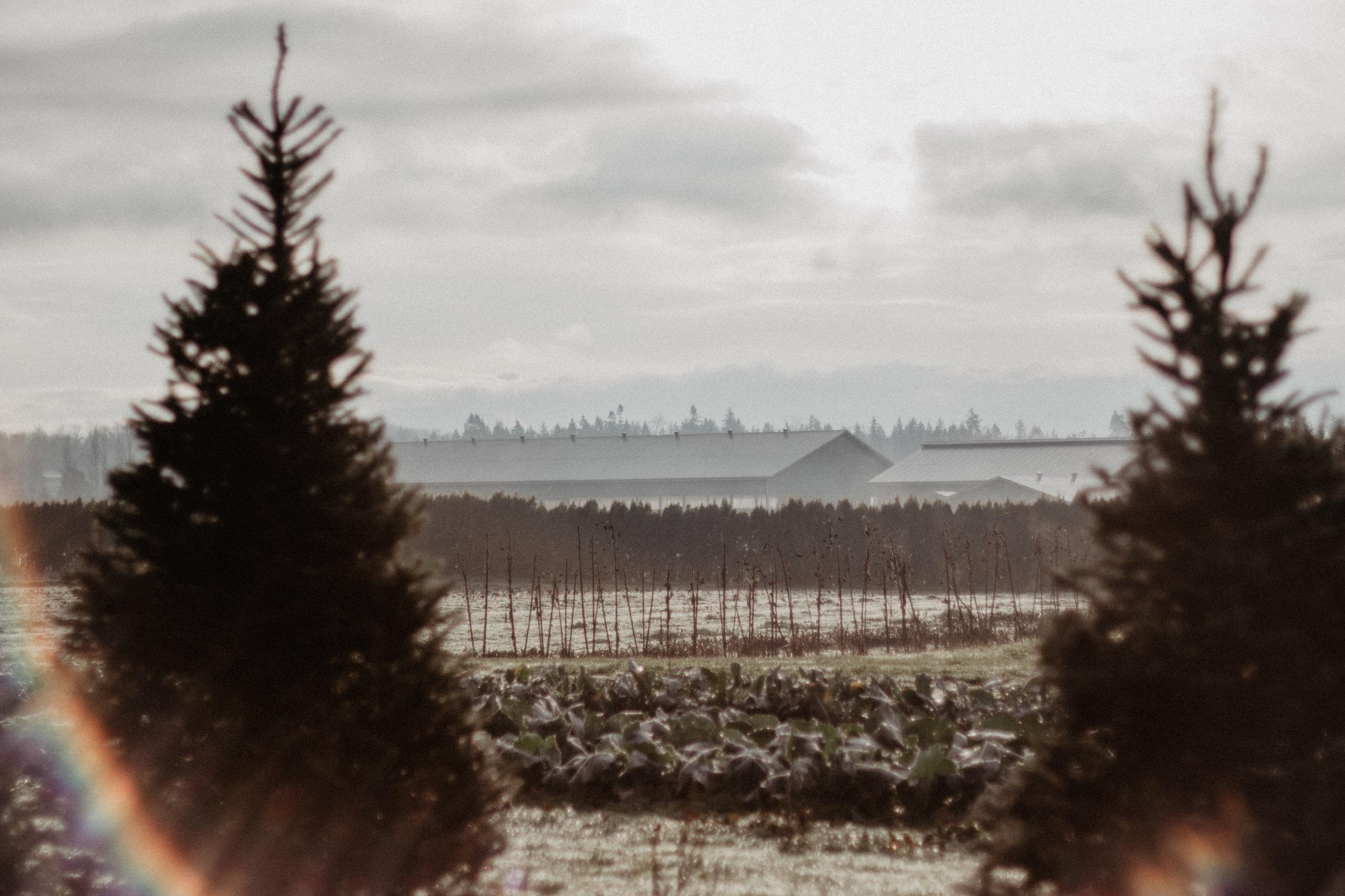 cozy christmas winners marshalls-1.jpg
