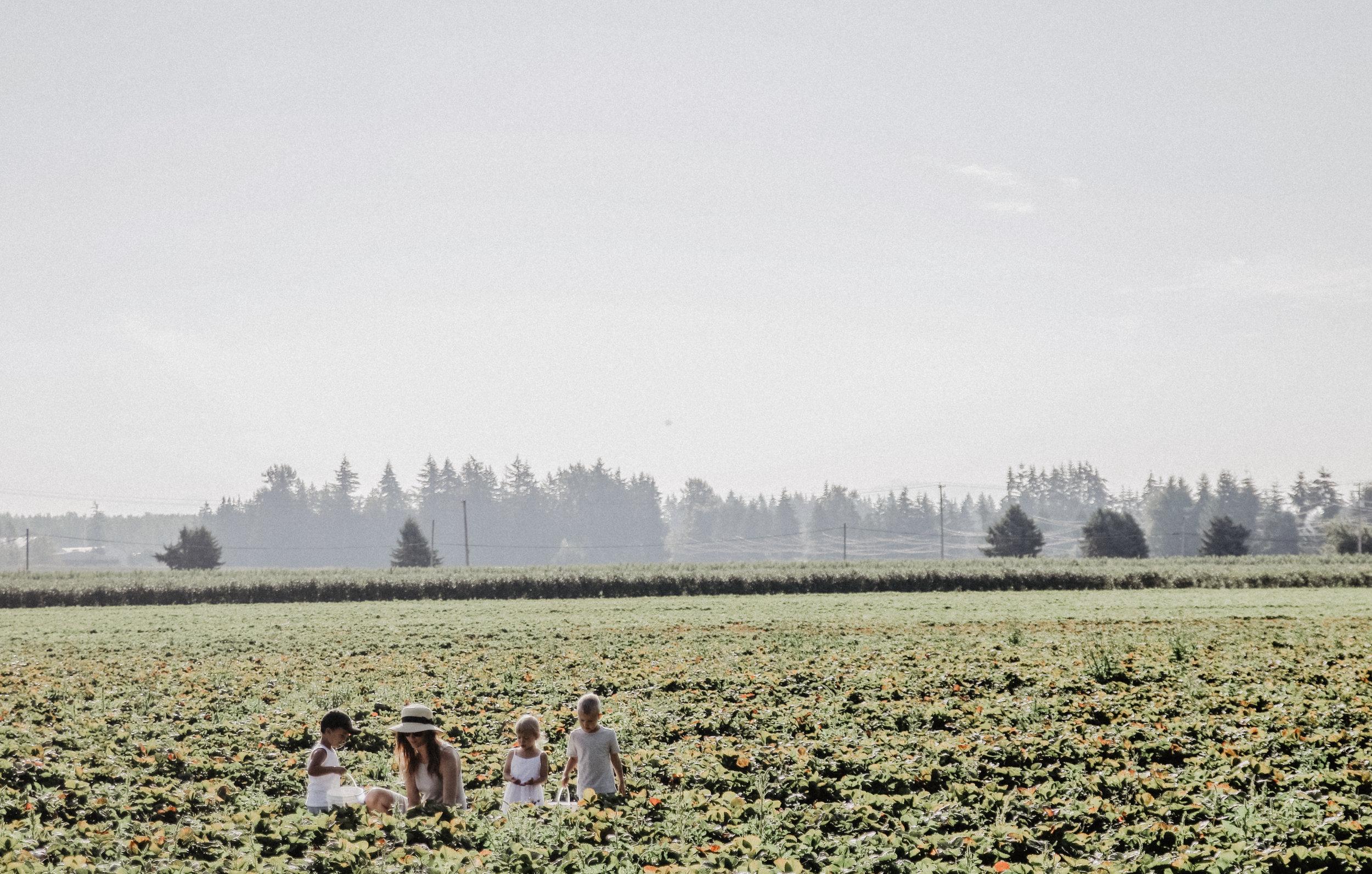 Driediger farms-3.jpg