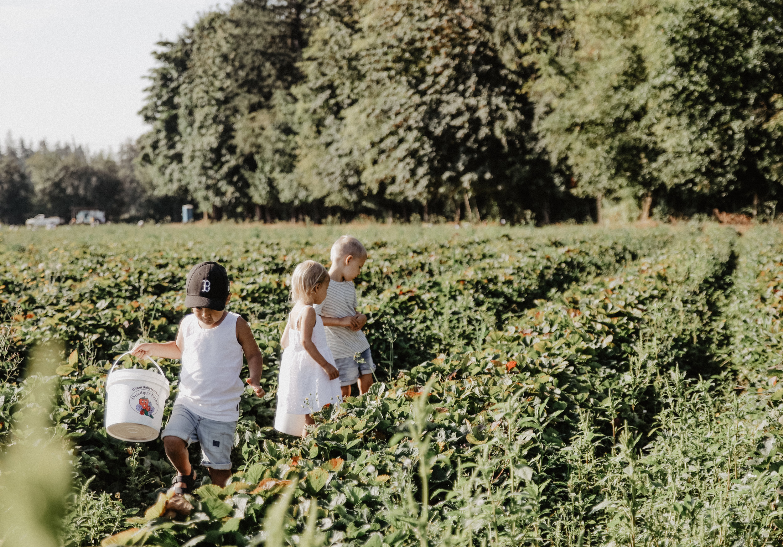 Driediger farms-5.jpg
