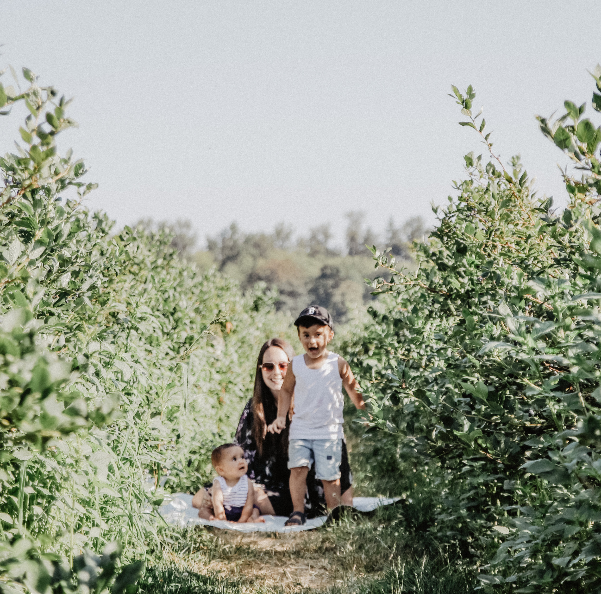 Driediger farms-13.jpg