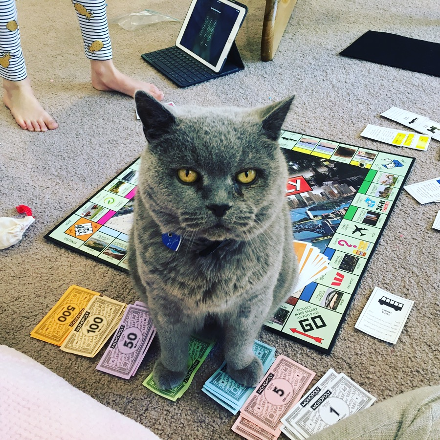 Alfie like me hates 'bored' games- so signed up to pick the top #craphousewifecats .
