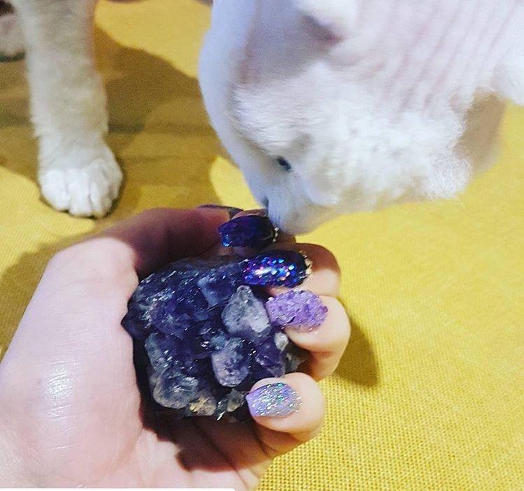 Fancy nails+ fine cat = style.
