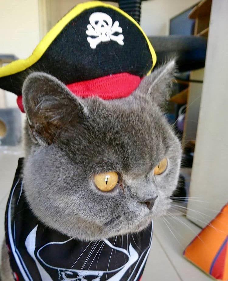 Ziggy the pirate!