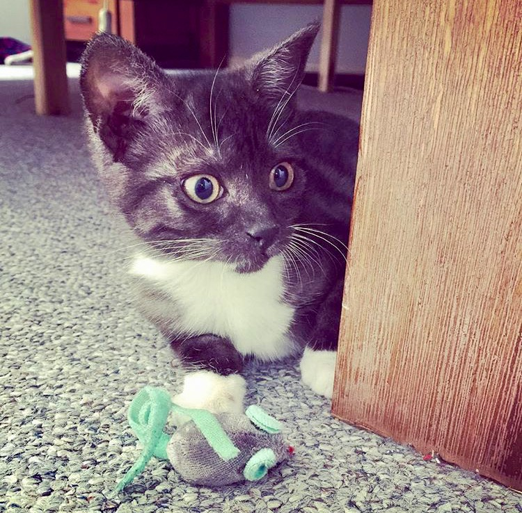 Lily likes to play cat and mouse!