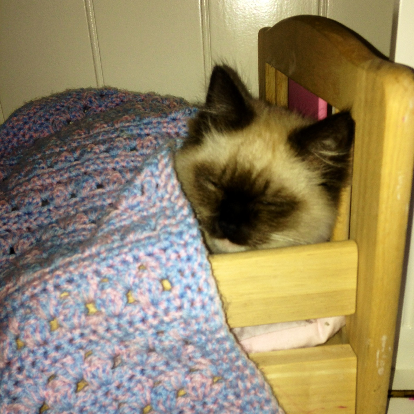 Daisy 'comfortable' in the dolls cot!