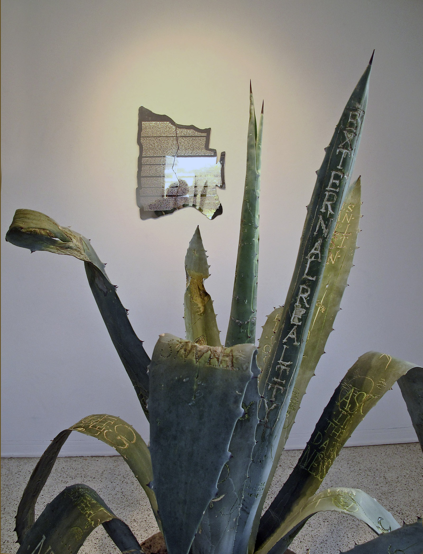 Ask in the darkness, 2010Installation view, Farside: Mosquera Collection, MiamiCarved blue agave plant and engraved nickel plated mirror polished aluminumDimensions variable -