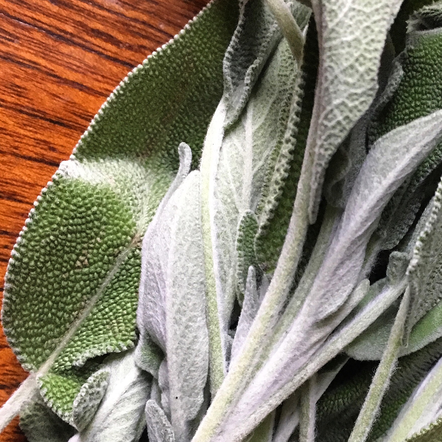Kitchen Sage