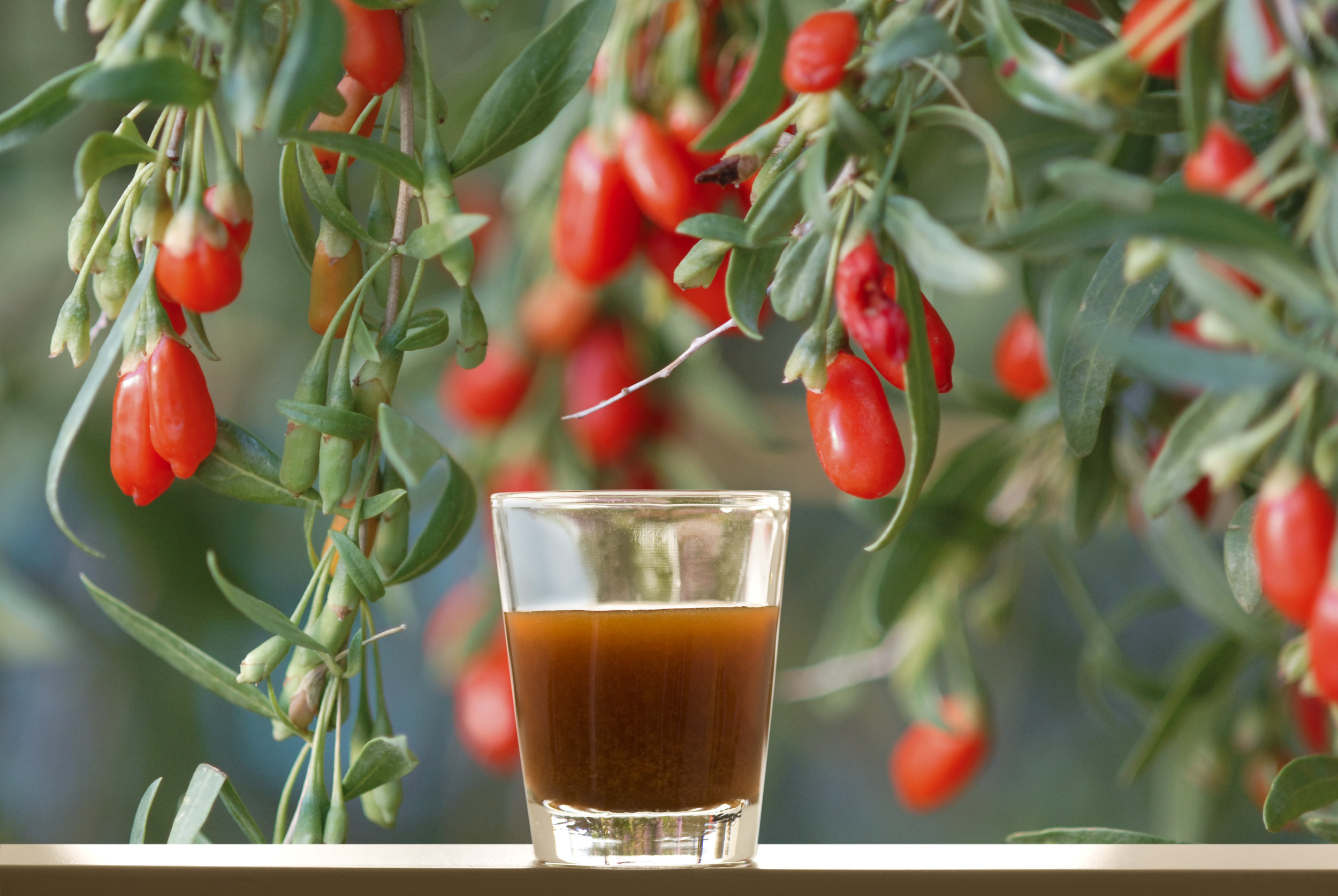 Ningxia Red with Berries.jpg