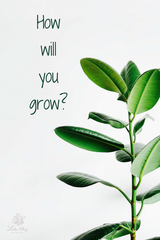 November 11- prioritize how will you grow?.png