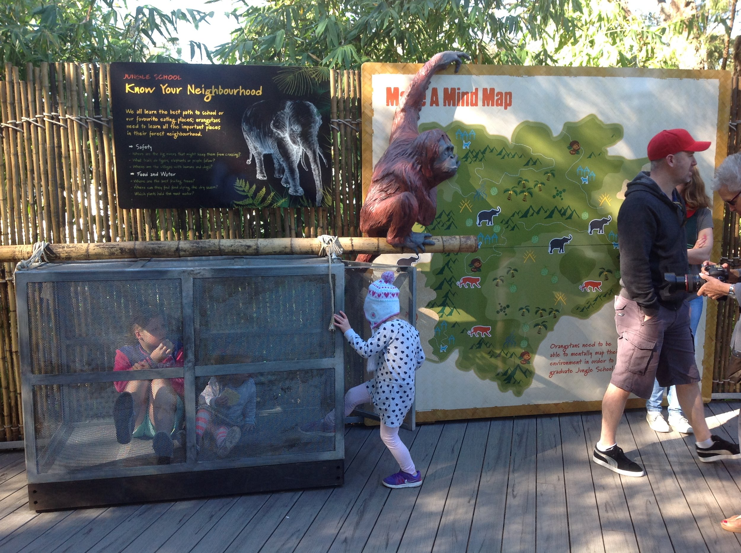 release crate and Orangutan sculpture Perth Zoo 2014.JPG