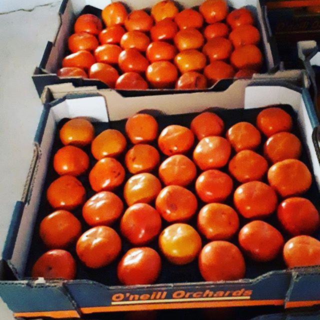 Persimmon Season is upon us! Jennifer and Jim from O'Neill Orchards will be joining us at the May Market with their delightful wares! If you haven't been lucky enough to try them yet come on down to Riverside Park this Sunday for a sample!  #shfm #swanhill #vfma #jointhelocalfoodrevolution #inseasonnow #persimmons #autumn🍁 #mallee