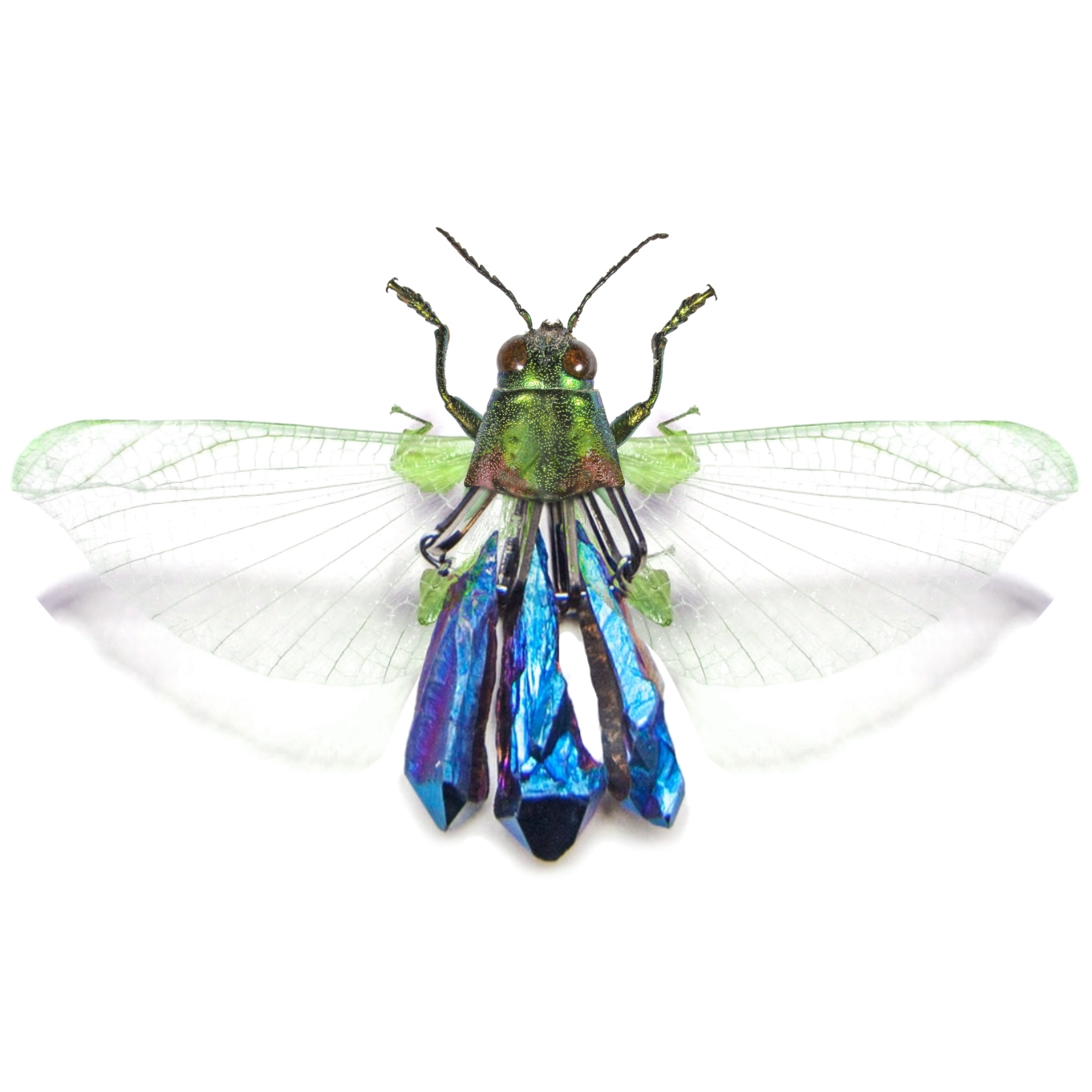 WildMoon_SS15_Insects_0003.jpg
