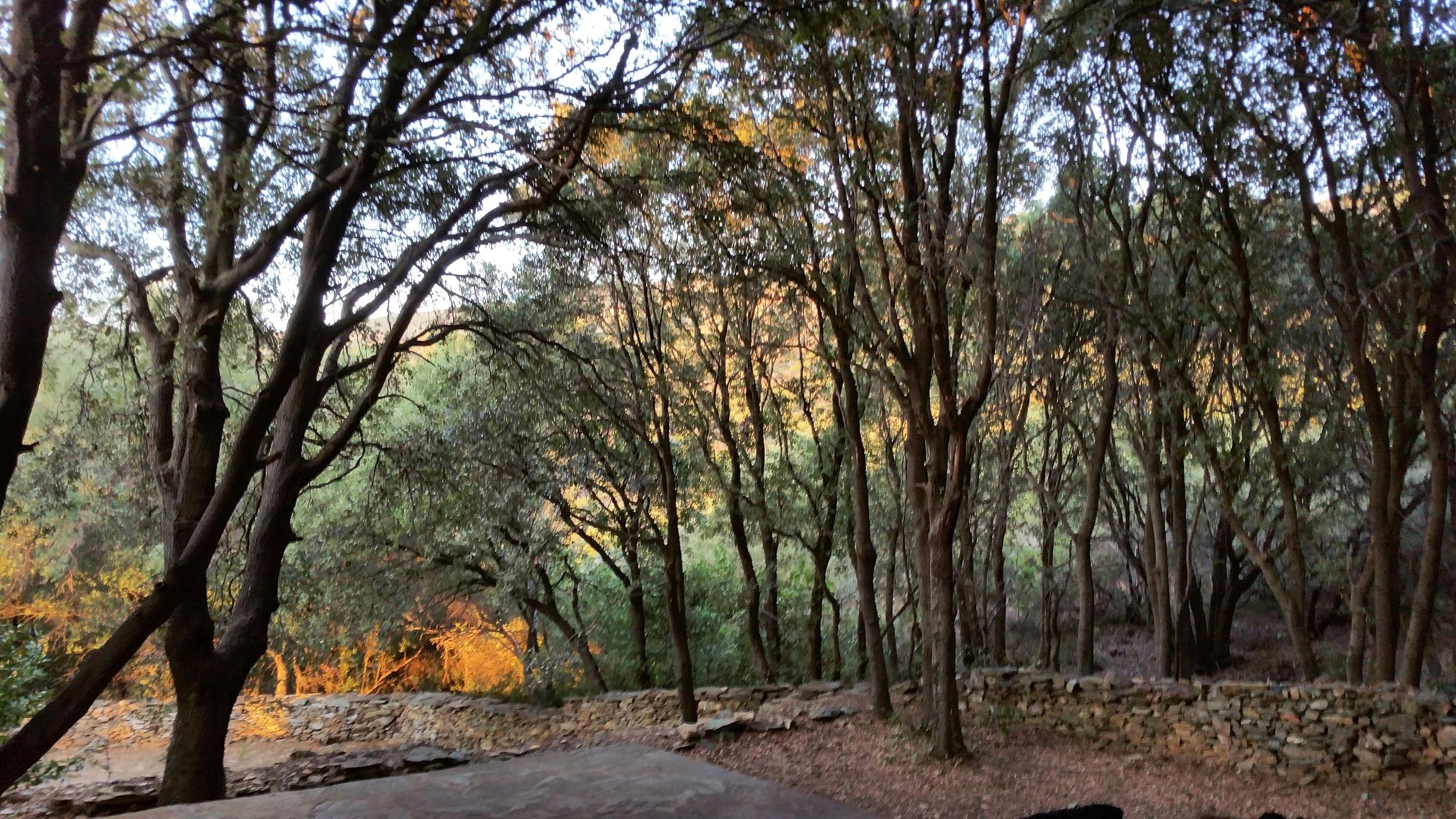 La forêt de chêne
