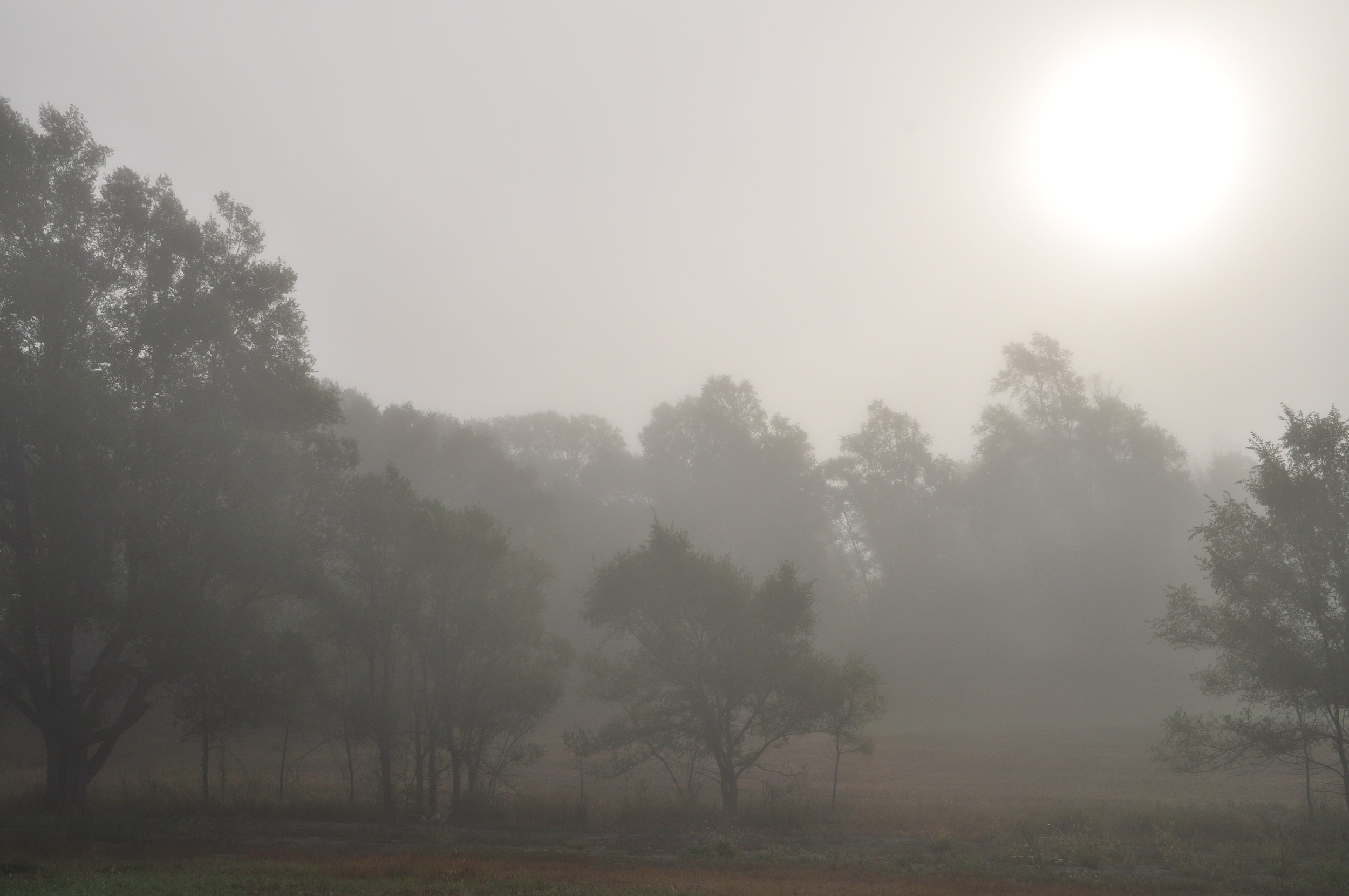 a foggy morning here on the farm