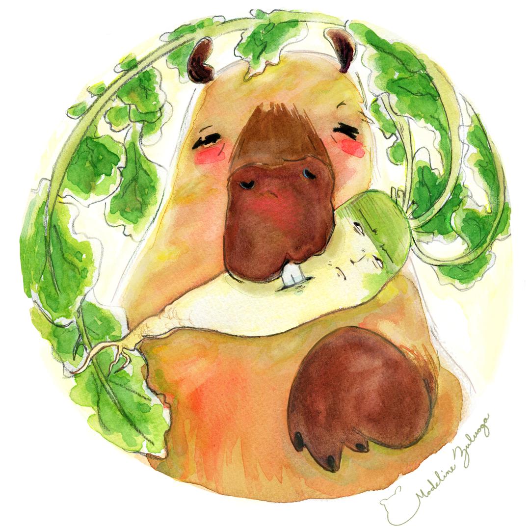 Madeline-Zuluaga-Capybara-and-Daikon-instagram-ver.png