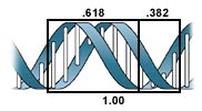 The Fibonacci sequence is found in DNA.