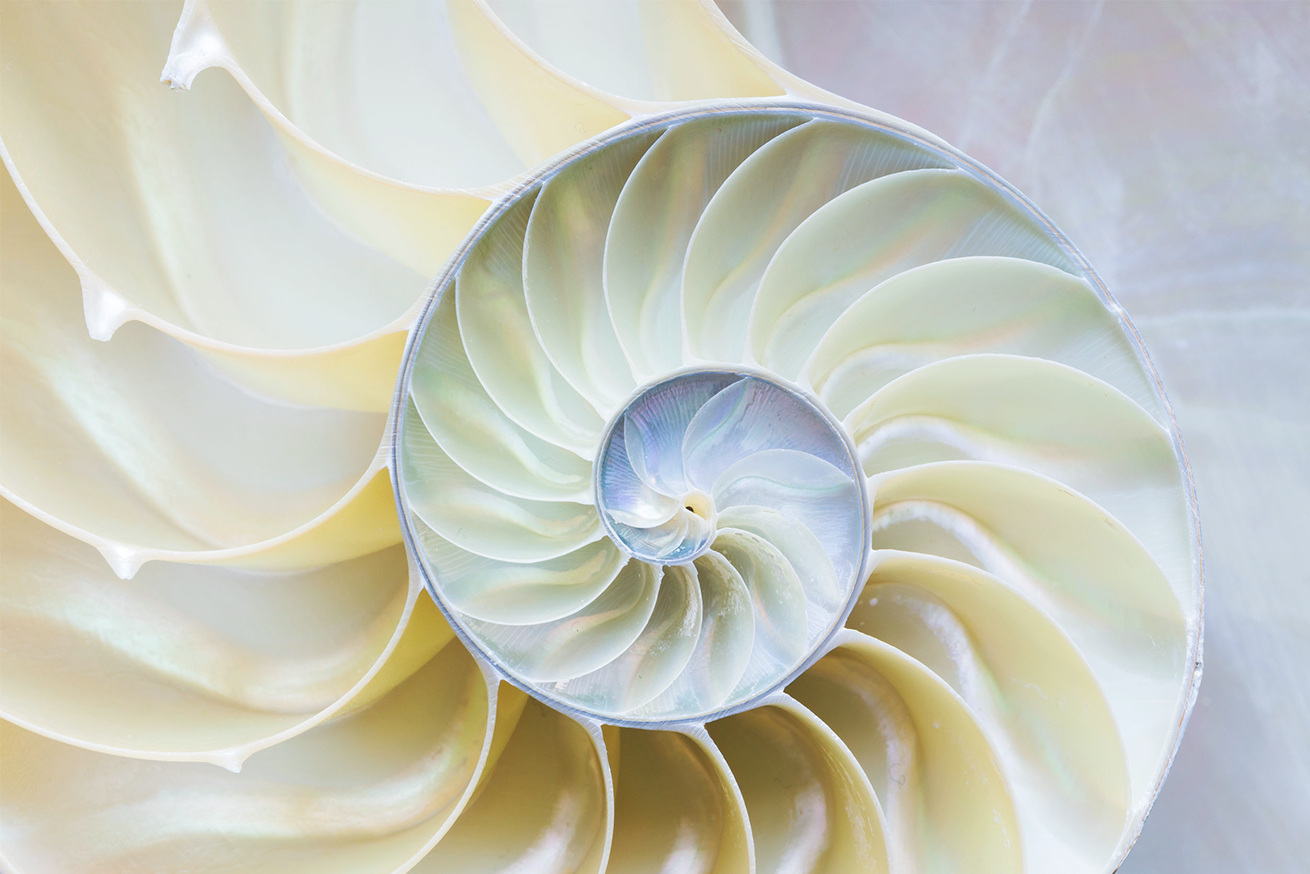 We invite you to discover what a Fibonacci Smile is... a blend of Art, Science and You.