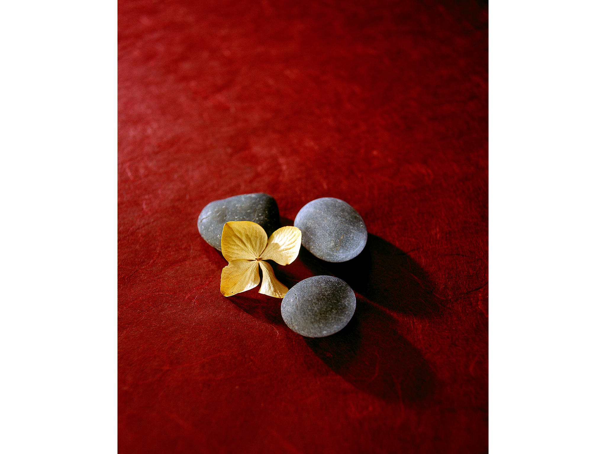 Beauty photograph of rocks and flower
