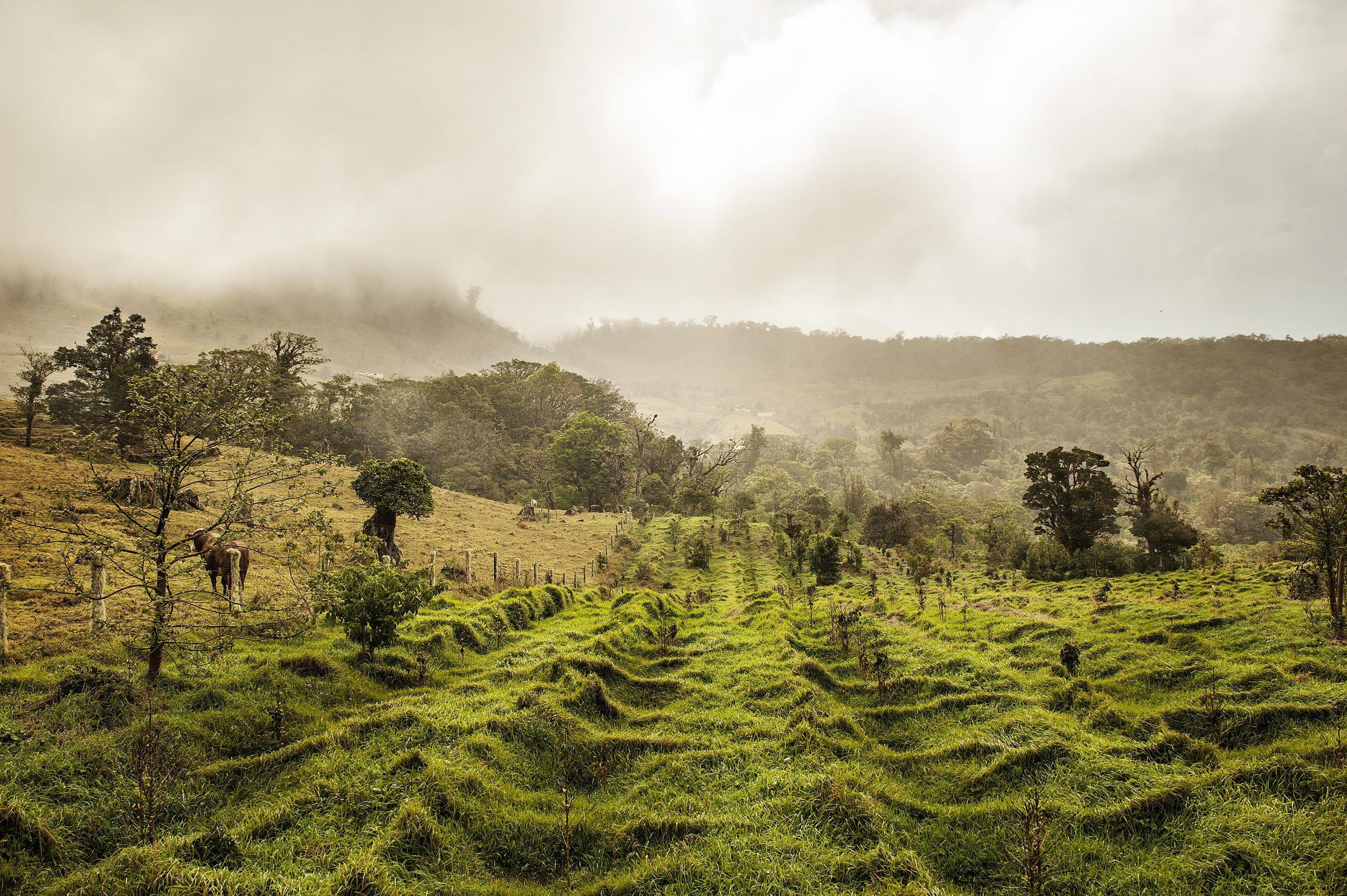 PANAMANIA.jpg